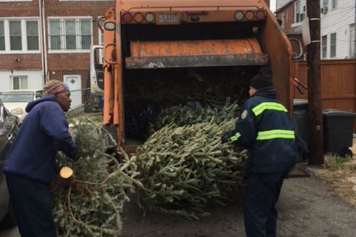 Workers picking up Holiday Trees into a city truck